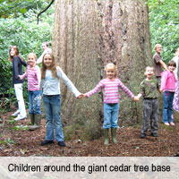 Giant Cedar Base